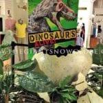 Dinosaur Eggs Store Display